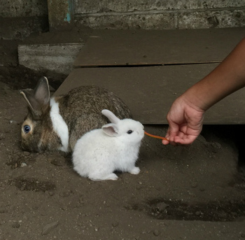 s1白ウサギ.jpg
